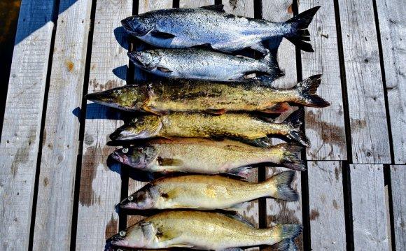 Для чистки рыбы от чешуи есть
