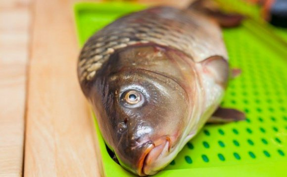 названием Большая рыба