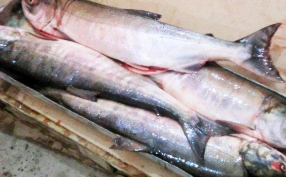 Рыба морская Кета купить