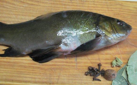 Мелкую чешую у этой рыбы можно