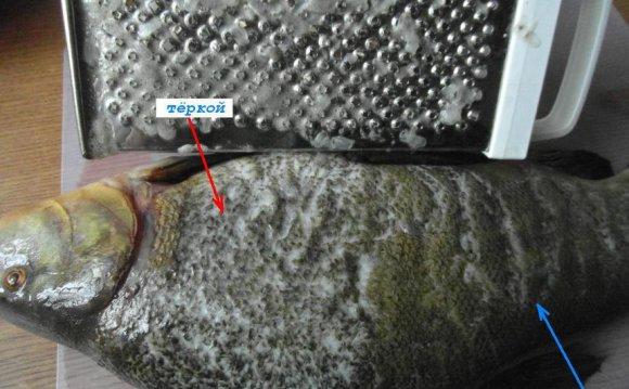 МК: способ чистить рыбу