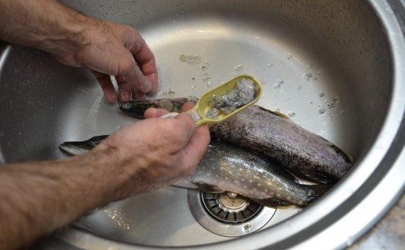 для чистки рыбы от чешуи