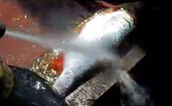 ВИДЕО: Чистка рыбы за 10