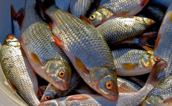 Все о рыбалке и рыбаках